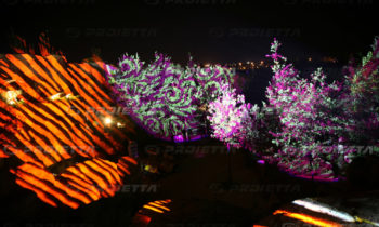 Plant fronds projection